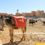 A-herd-or-drove-of-worker-donkeys-in-a-corral-,-in-Rissani,-Morocco.