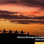 Morocco-Merzouga-Erg-Chebbi-sand-dunes-camel-caravan-sunset
