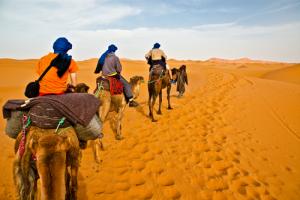 Camel trip in the desert Morocco